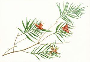 Curso Online Beta: Composición para la Ilustración Botánica @ Mi Naturalismo: Escuela Online de Ilustración Botánica