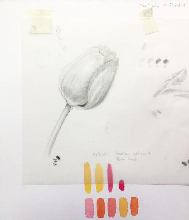 Estudio tonal de tulipán
