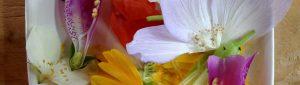 Curso Online Beta: Todo sobre las flores. @ Escuela Online