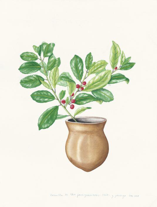 mate, porongo, mi naturalismo, ilustración botánica, acuarela