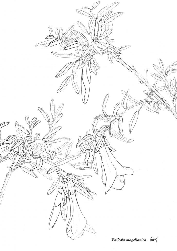 Ilustraciones Imprimibles para Colorear – GMK
