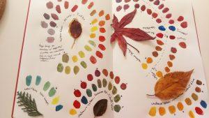 Curso Online: Color para Ilustración Naturalista Nivel I @ Escuela Online