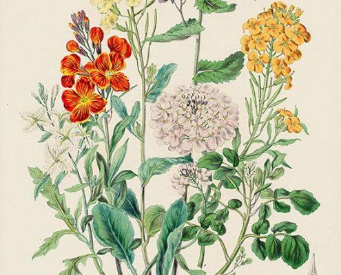 Curso online de ilustración botánica Geraldine MacKinnon Mi Naturalismo