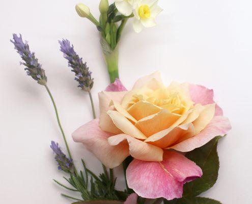 Lámina botánica con tres tipos de flores en acuarela