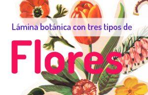 """Curso Online: """"Lámina Botánica con 3 tipos de flores"""" @ Mi Naturalismo - Escuela Online de Ilustración Botánica"""