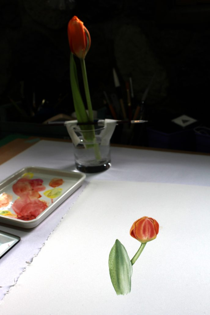 tulip Geraldine MacKinnon Mi Naturalismo