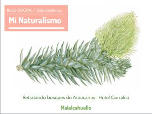 Rutas Cocha / Exploraciones Mi Naturalismo / Malalcahuello @ Hotel Corralco Spa
